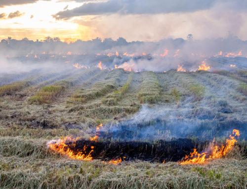 حرق حقول القمح في سوريا وسؤال الخسارات