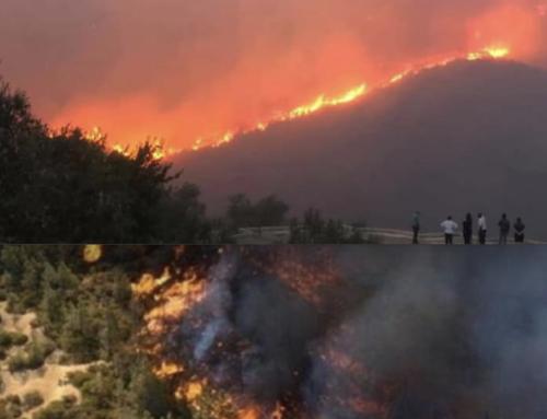 حرائق غابات سوريا ولبنان ستعطل مناعة المنطقة الصحية، ما العمل؟