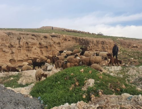لماذا خسرت سوريا نصف ثروتها الحيوانية؟